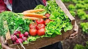 Tips on Buying Organic Food Within Your Budget post thumbnail image